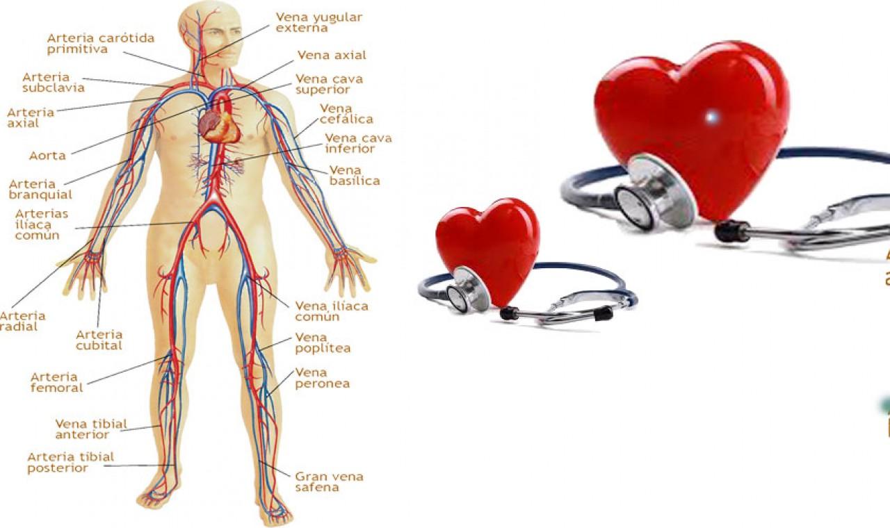 sistema circulatorio de enfermedades de salud